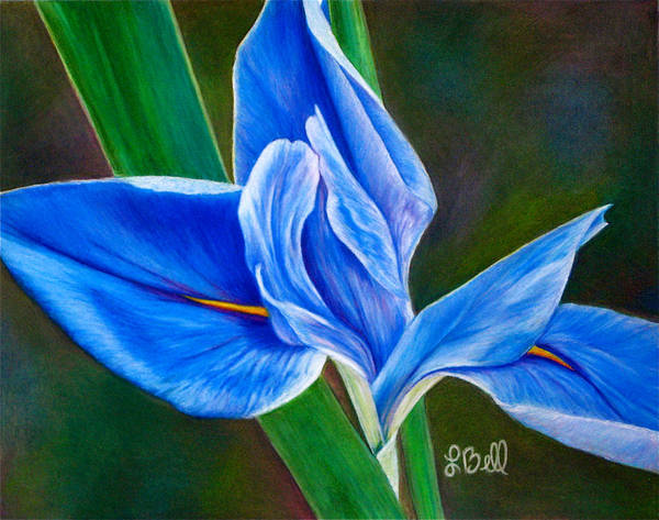 Iris Poster featuring the painting Blue Iris by Laura Bell