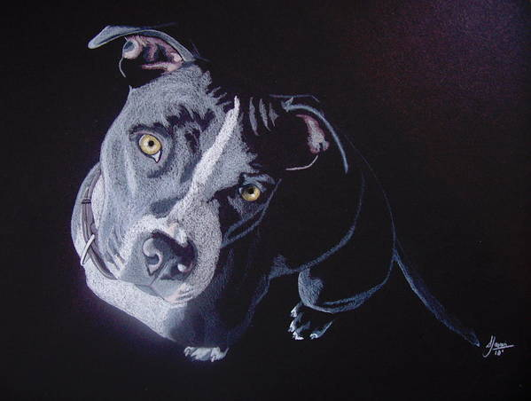 Pit Bull Poster featuring the drawing Blue Light by Stacey Jasmin