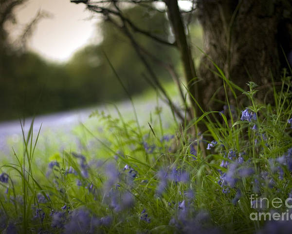 Poster featuring the photograph Blue Meadow by Angel Ciesniarska