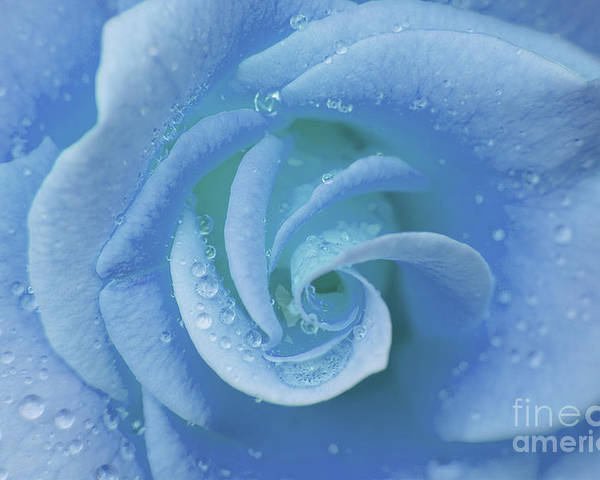 Flower Poster featuring the photograph Blue Rose by Julia Hiebaum