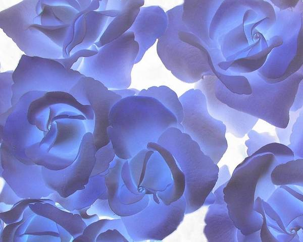 Blue Poster featuring the photograph Blue Roses by Tom Reynen
