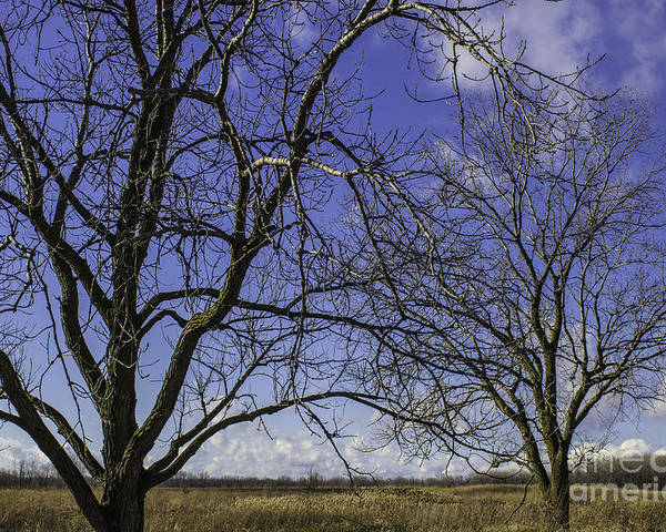 Blue Poster featuring the photograph Blue Sky December by Doug Daniels