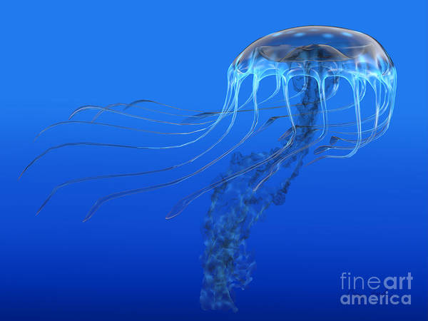 Jellyfish Poster featuring the painting Blue Spotted Jellyfish by Corey Ford