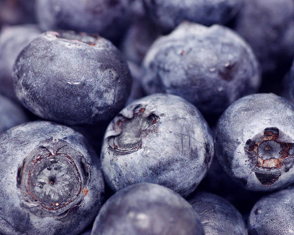 Background Poster featuring the photograph Blueberry Macro by Kitty Ellis