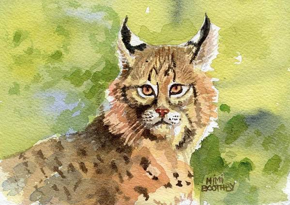 Bobcat Poster featuring the painting Bobcat by Mimi Boothby