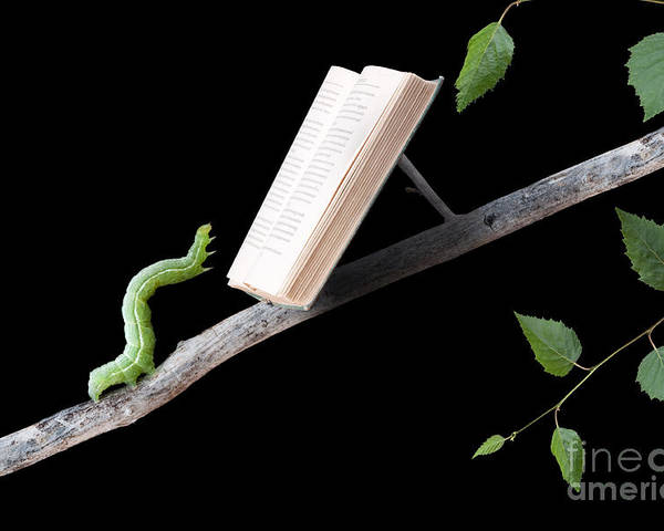 Worm Poster featuring the photograph Book Worm by Cindy Singleton