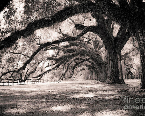 Boone Hall Poster featuring the photograph Boone Hall Plantation Live Oaks by Dustin K Ryan