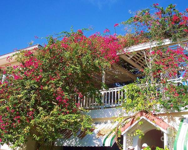 Flowers Poster featuring the photograph Bougainvillea Villa by Debbi Granruth