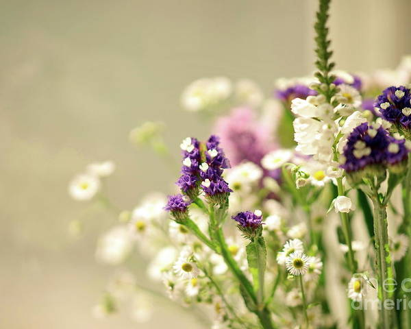 Flowers Poster featuring the photograph Bouquet Of Wildflowers by Lil Kin