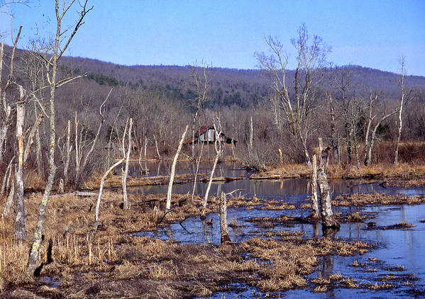 Poster featuring the photograph Boxely Swamp2 by Curtis J Neeley Jr