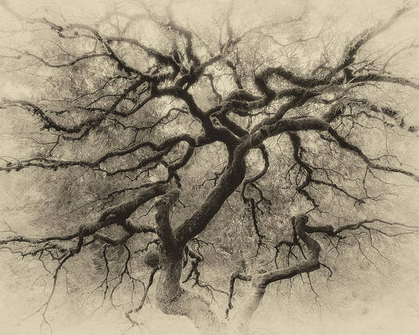 Portland Poster featuring the photograph Branching Out In Autumn Antique by David Gn