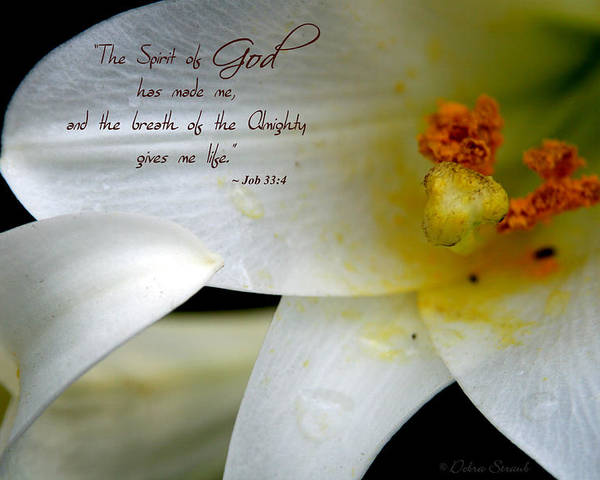 Lily Poster featuring the photograph Breath Of Life by Debra Straub