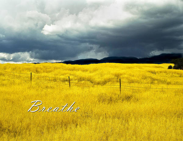 Field Poster featuring the photograph Breathe by Lou Novick