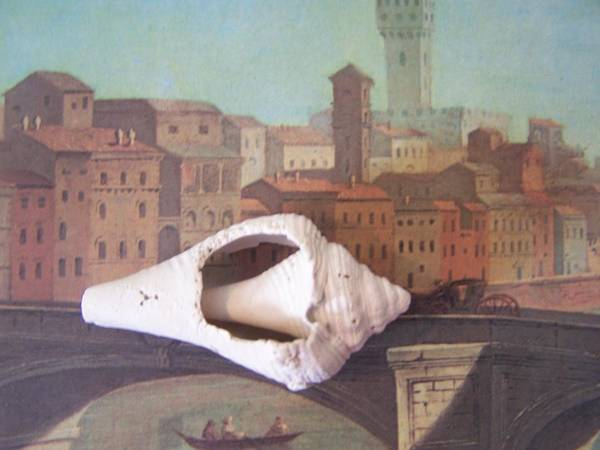 Shells Poster featuring the sculpture Bridge Over Florence by Geraldine Liquidano