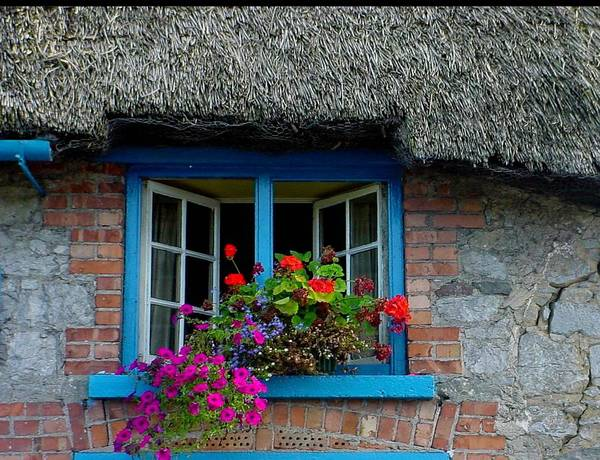 Adare Poster featuring the photograph Bright Blooms by PJ Cloud