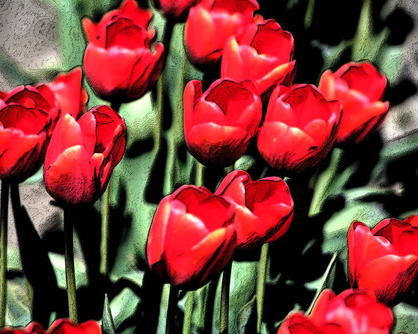 Red Poster featuring the photograph Brilliant Tulips Dp22 by Mary Gaines