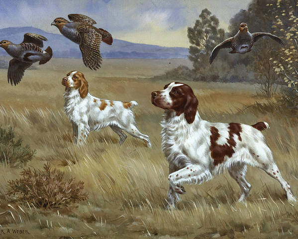 Illustration Poster featuring the photograph Brittany Spaniels Flush Three Birds by Walter A. Weber