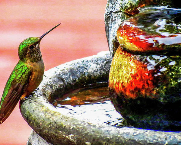 Colorado Poster featuring the photograph Broad-tailed Hummingbird At Water Fountain by Marilyn Burton