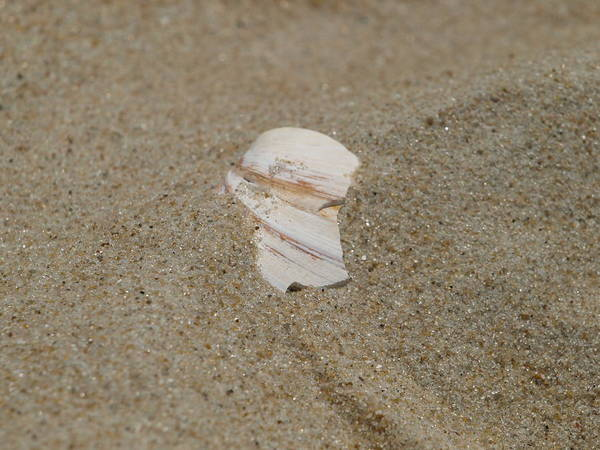 Sand Poster featuring the photograph Broken Shell by Kim
