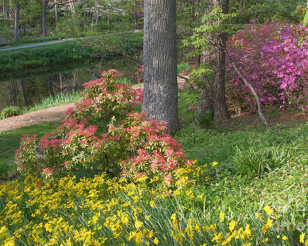Spring Landscapes Poster featuring the photograph Brookside Gardens 8 by Chris Scroggins