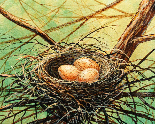 Wildlife Poster featuring the painting Brown Speckled Eggs by Frank Wilson