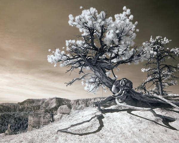 Bryce Poster featuring the photograph Bryce Canyon Tree Sculpture by Mike Irwin