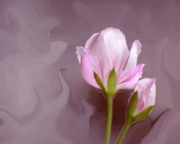 Flower Bud Poster featuring the photograph Bud Of Art by Jim Darnall