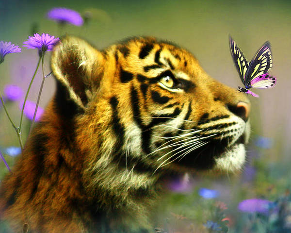 Tiger Cub Poster featuring the photograph Buddy And The Butterfly by Trudi Simmonds