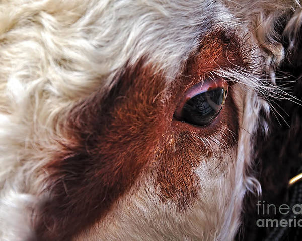 Photography Poster featuring the photograph Bull's Eye by Kaye Menner