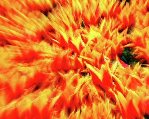 Orange Poster featuring the photograph Burst Of Orange by Daniel Koglin