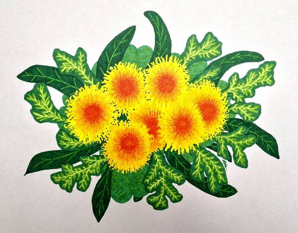 Dandelions Poster featuring the drawing Burst by Wendy Rickwalt