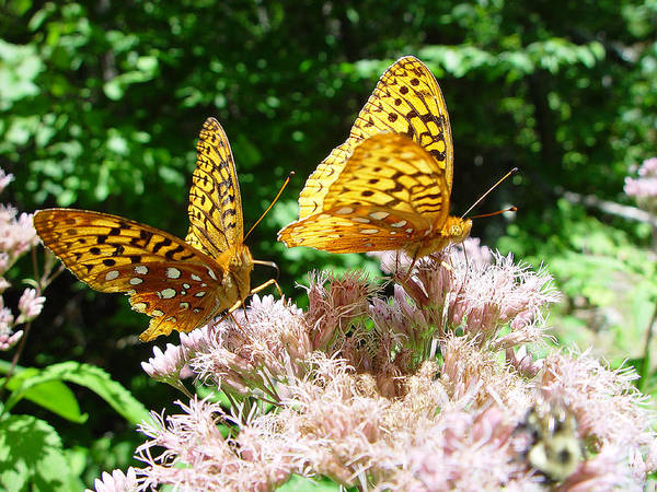 Nature Poster featuring the photograph Butterflies by Eric Workman
