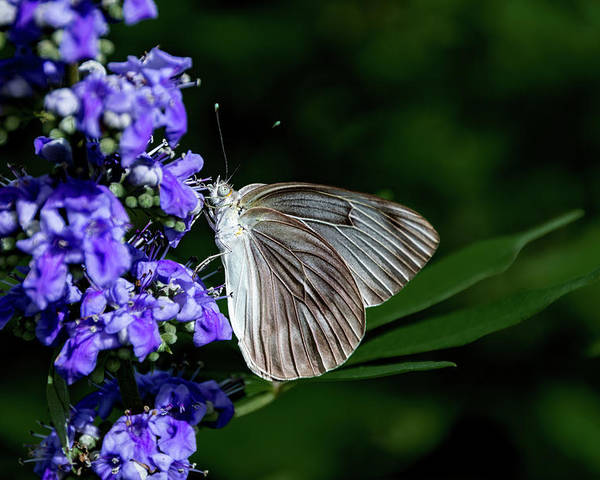 Antenna Poster featuring the photograph Butterfly And Flower by Jay Stockhaus