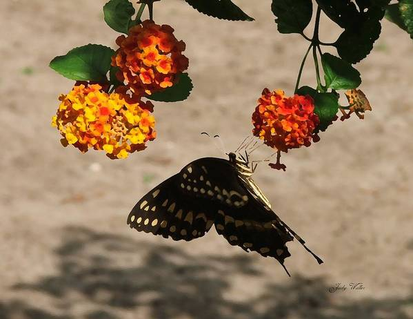 Butterfly Poster featuring the photograph Butterfly And Nature by Judy Waller