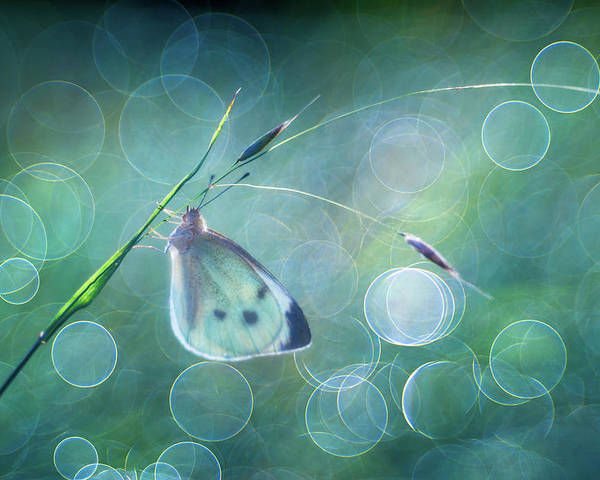 Butterfly Bokeh Trioplan Magic Poster featuring the photograph Butterfly Imagination by Petar Sabol