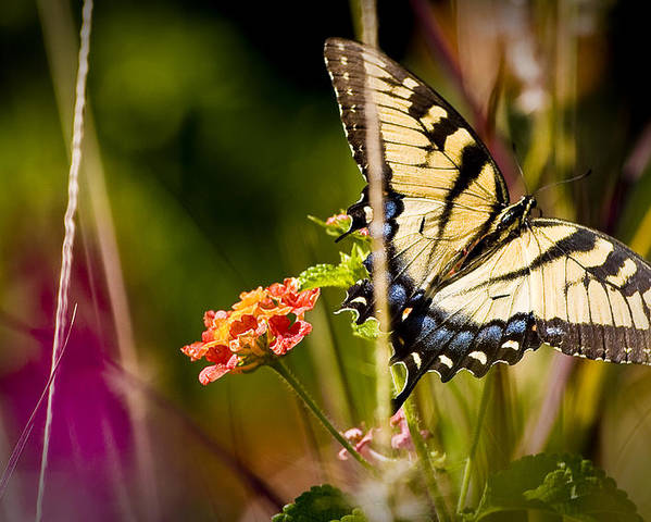 Nature Poster featuring the photograph Butterfly Jungle by Ches Black