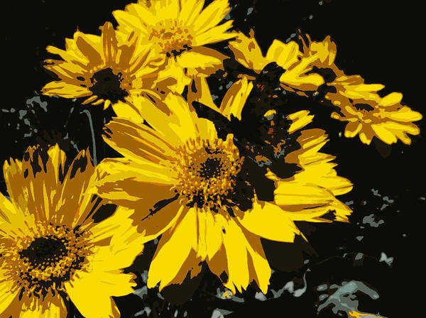 Poster featuring the photograph Butterfly On Balsamroot by Rachel Vdolek