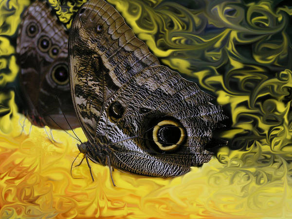 Butterfly Poster featuring the photograph Butterfly Reflections by Louise Magno