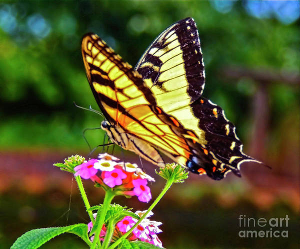Butterfly Poster featuring the photograph Butterfly Series #8 by Edita De Lima