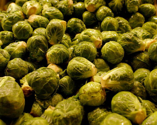 Brussel Sprouts Poster featuring the photograph Cabbage Family by Sonja Anderson
