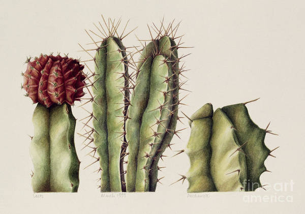 Botanical Poster featuring the painting Cacti by Annabel Barrett