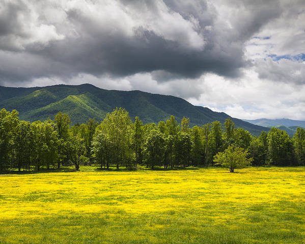 Cades Cove Poster featuring the photograph Cades Cove Great Smoky Mountains National Park Tn - Fields Of Gold by Dave Allen