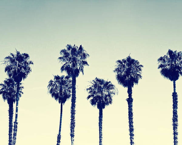 California Poster featuring the photograph California Palm Trees by Anna Floridia