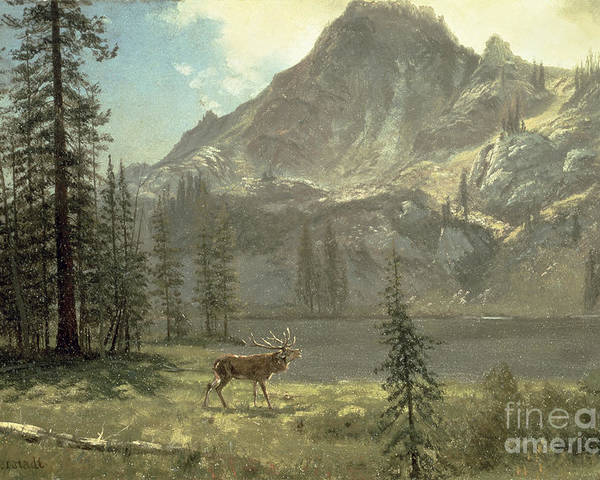 Bierstadt Poster featuring the painting Call Of The Wild by Albert Bierstadt