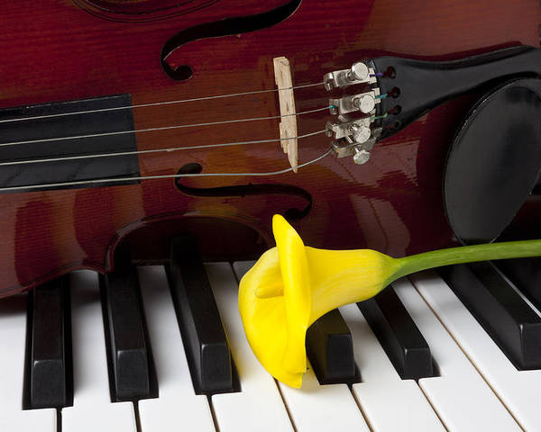 Calla Lily Poster featuring the photograph Calla Lily And Violin On Piano by Garry Gay