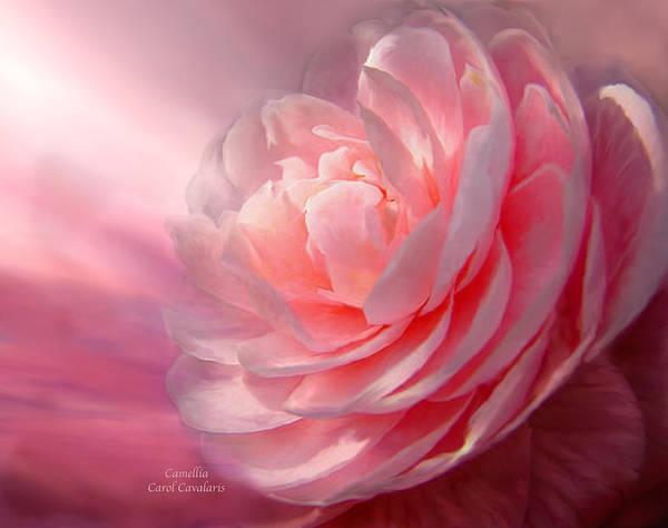 Camellia Poster featuring the mixed media Camellia by Carol Cavalaris