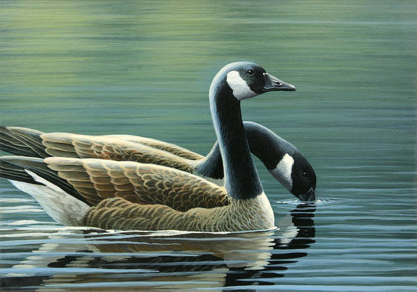 Canada Geese Poster featuring the painting Canada Geese by Mark Mittlesteadt