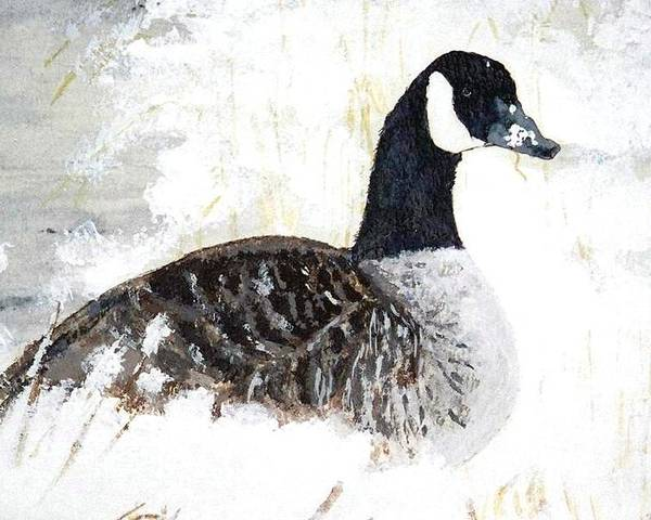 Canadian Goose Poster featuring the painting Canadian Snow by Debra Sandstrom