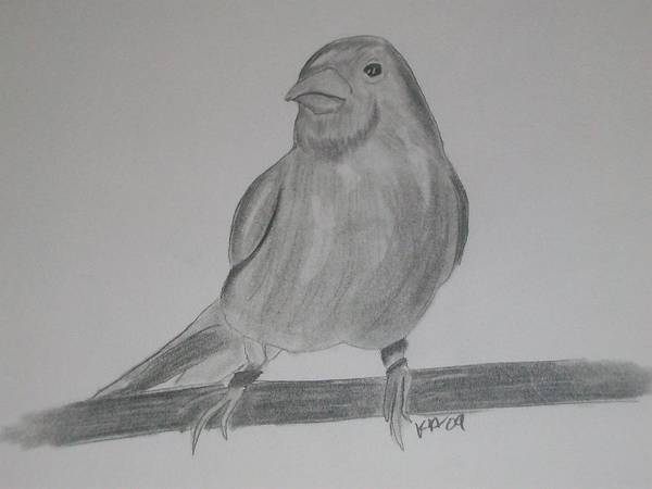 Bird Poster featuring the drawing Canary by Kristen Hurley