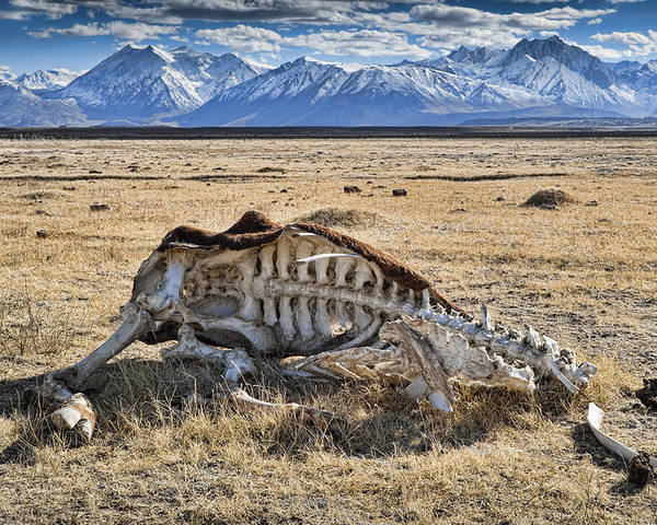 Nature Poster featuring the photograph Carcass With A View by Kelley King